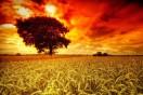 506831__tree-in-fields_p